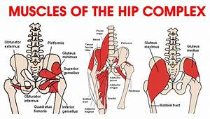 Ask The Physio  U2026 Hip Flexors