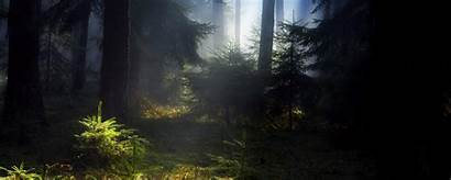Forest Multiscreen Wallpapers Landscapes Plants Definition Updated