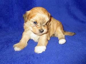 puppynursery