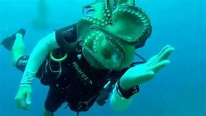 Octopus does not attack this diver - YouTube