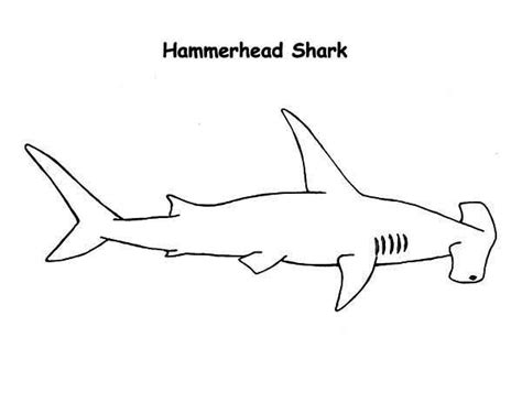 realistic drawing  hammerhead shark coloring page