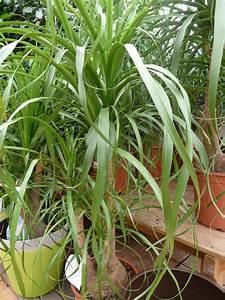 Plantes Vertes Pepinierelelann Ppinires Vente D39arbustes