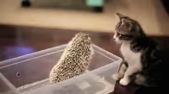 cutest hedgehog gifs