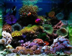 Nano Aquariums Saltwater Reef Tanks