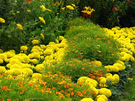 flowers for flower beds flower bed borders casual cottage