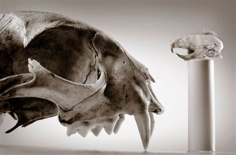 robin loznak photography animal skulls  seamless