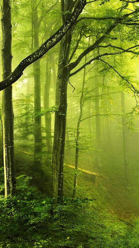 fantasy green forest android wallpaper