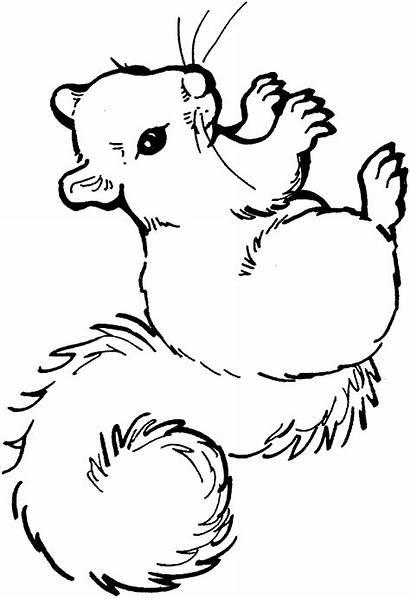 Coloring Squirrel Pages Animal Animals Printable Squirrels