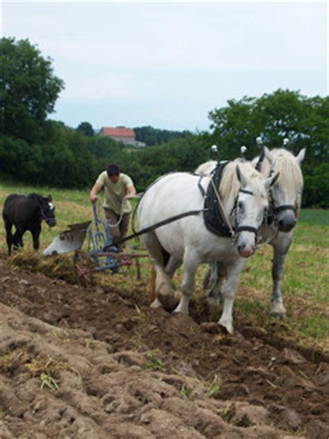la pomme de terre 224 cheval culture de la pomme de terre
