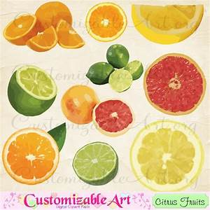Citrus Fruit Clip Art Digital Fruits Sour Lemon Lime Oranges