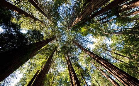 redwood national park california tall tales