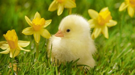 Baby Animal Wallpapers Free - animals pictures and wallpapers