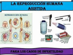 La reproduccion humana asistida