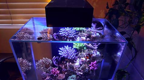 how to setup a nano reef mad hatter s reef