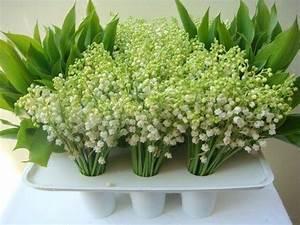 Quand Planter Du Muguet : acheter des tulipes photo de fleur une pensee fleuriste ~ Melissatoandfro.com Idées de Décoration
