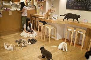 cat cafe tokyo s cat cafe s a world on its own tokiotours your