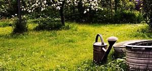 Dünger Selber Machen : d nger f r pflanzen ganz nat rlich selber machen d nger f r pflanzen pflanzen und hochbeet ~ Watch28wear.com Haus und Dekorationen