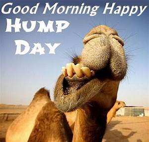 Good Morning Happy Hump Day Camel   Hump Day   Pinterest ...