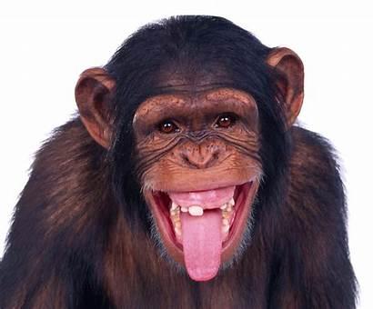 Monkey Ranbir Kat Transparent Controversies Hate Bond