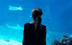 Fische Aquarium Hamburg : da wo die wilden rochen wohnen ~ Lizthompson.info Haus und Dekorationen