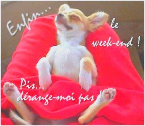 week end un peu d humour et de la fraicheur brrrrrr et 1er avril de le tricot de