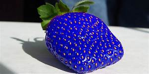 Blue Strawberry Real | www.pixshark.com - Images Galleries ...