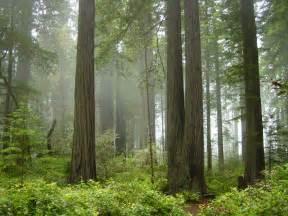 Treehouse Big Sur