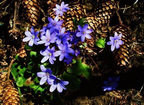 Pavasaris: DZEJA
