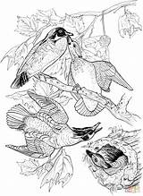 Coloring Ducks Wood Pages Printable Drawing Clipart Birds Supercoloring Paper Categories sketch template