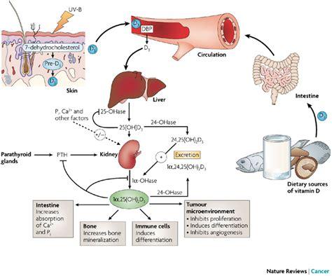 vitamina  sempre piu evidente la correlazione   linfomi
