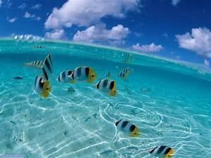 ocean desktop backgrounds | ocean desktop background ...