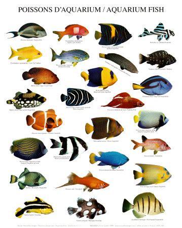 basic methods of pet care the fish breeds for your aquarium