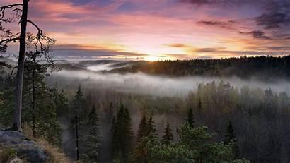 Sun Forest Rising Wald Mist Nature Sunset