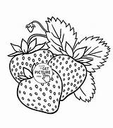 Coloring Fruit Fruits Pages Printable Strawberries Drawing Printables Strawberry Yummy Children Wuppsy Vegetable Popular Getdrawings Designs Visit Plant Radiokotha sketch template