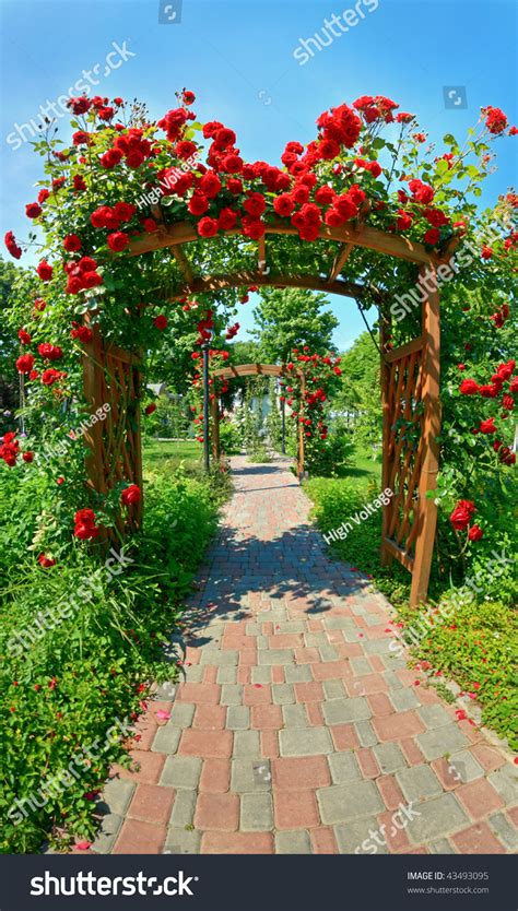 photo  nice garden lots roses stock photo