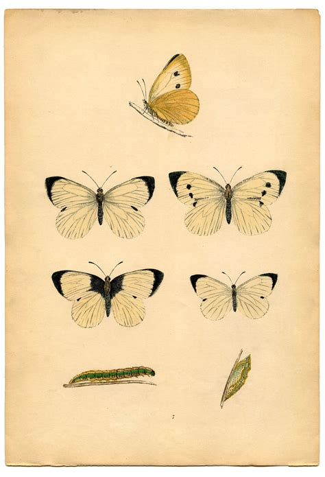 instant art printable white butterflies  graphics fairy