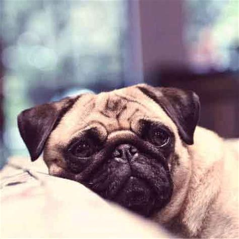 thyroid problems  dogs  guide  hypothyroidism