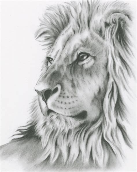 Best Lion Head Drawings Ideas And Images On Bing Find What You