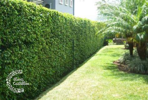 Ideas Para Decorar Grandes Jardines  Flores Castillon
