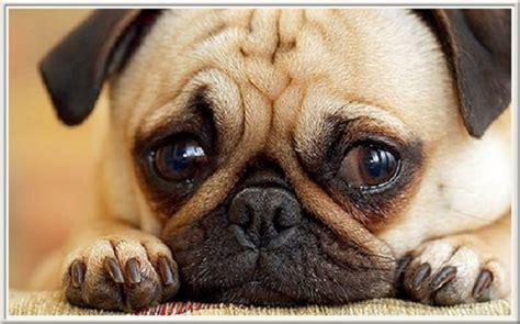 si鑒e psa máte psa dejte si pozor tato jídla ho mohou zabít topmagazine cz