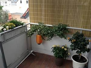 Sichtschutz Am Balkon : seitlicher sichtschutz am balkon ~ Sanjose-hotels-ca.com Haus und Dekorationen