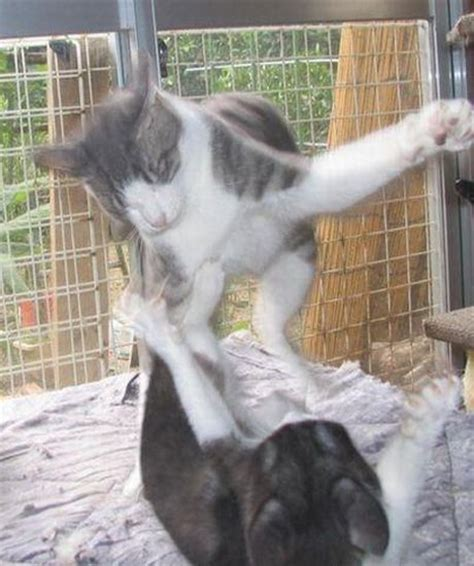 Funny Animal Pictures   Strong Cat Fighter