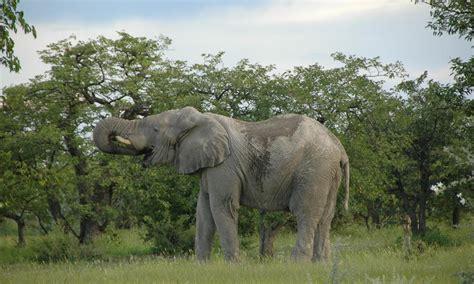 namibia animals places  threats wwf