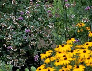 Florida Butterfly Garden Plants