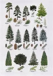8 proximity the elements different types of trees are placed to one another but with