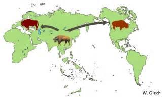 wisent european wood bison and aurochs extinct ox lamus dworski