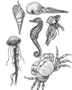 realistic seahorse drawing - Google Search | Poster design | Seahorse tattoo, Seahorse drawing