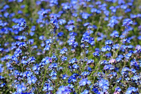 blaue blumen frühling rhododendronpark katharazzi photographykatharazzi photography