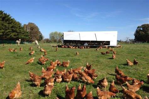 range chickens   caravan abc news