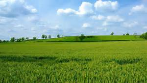 What Is the Difference Between an Acre and a Hectare ...